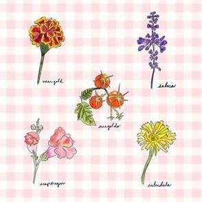 September Garden Study Pink Gingham