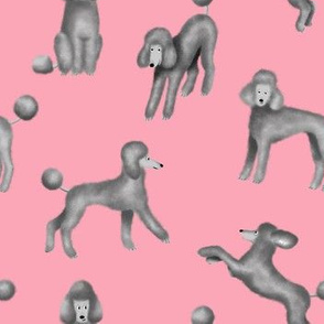 Grey Poodles on Pink Background
