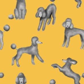 Grey Poodles on Yellow Background