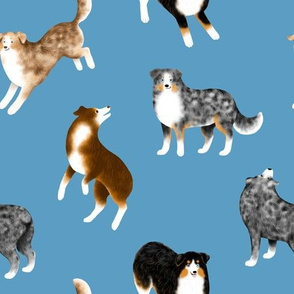 Australian Shepherds (Blue Background)