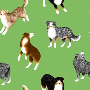 Australian Shepherds (Green Background)