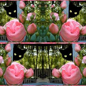 Peek-a-Boo Black Cats in the rose garden!