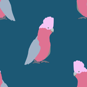 What a Galah! Style 1