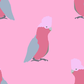 What a Galah! Style 2