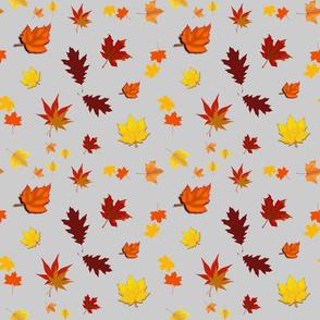 Falling Leaves of Autumn... silver grey, medium