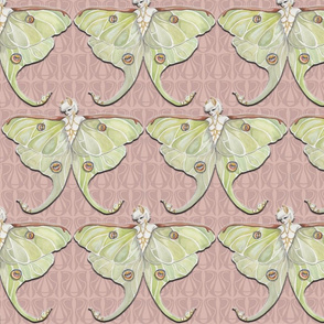 Beeba Moth-Pink