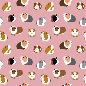 Guinea Pigs on Pink - small scale