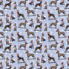 The Christmas Mexican Hairless (Xoloitzcuintle) Xolo Dog