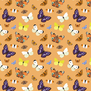Butterflies on Orange - medium scale