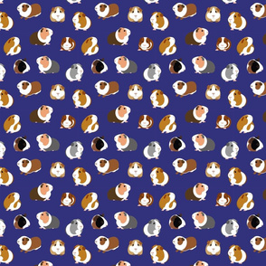 Guinea Pigs on Navy Blue - small scale