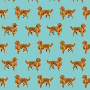 nova scotia duck tolling retriever - dog fabric, dogs fabric, pet, pet friendly, dog breeds, -  light blue