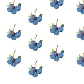 devaney_blue_berry_1