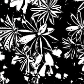 lupines 2  achtergrond zw