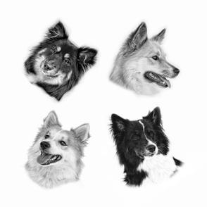 Icelandic Dog Portrets