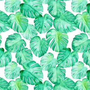 (extra small scale) watercolor monstera leaf C19BS