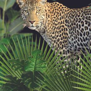 Jungle Leopard Noir