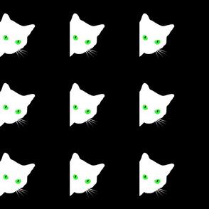 Peek-a-Boo White Cat - green eyes on black