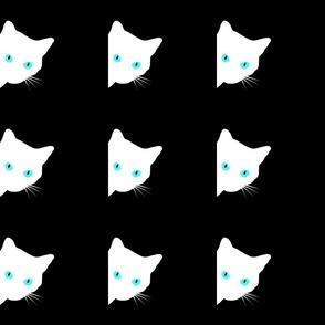 Peek-a-Boo White Cat - blue, turquoise eyes on black