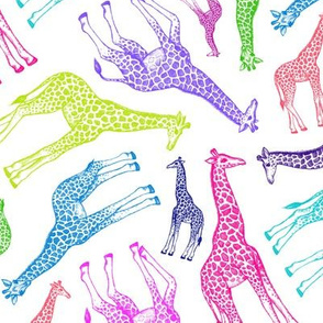 Rainbow Giraffes - medium