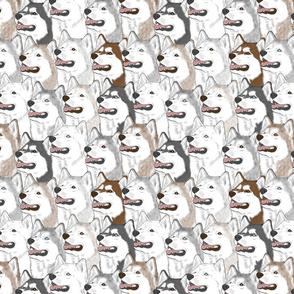 Siberian Husky portrait pack