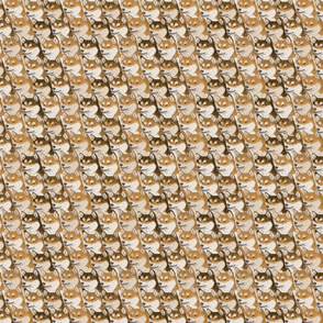 Small Red Shiba Inu portrait pack