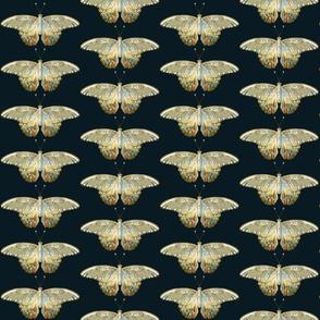 Papillon Bright