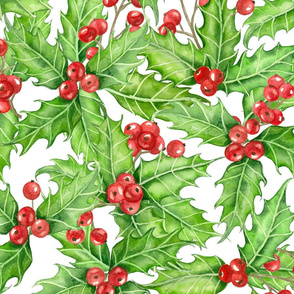 Holly berry on white