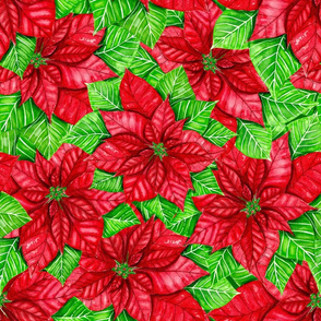 Poinsettia watercolor 2