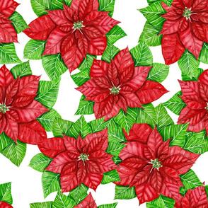 Poinsettia watercolor 1