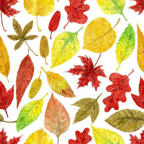 Autumn leaves watercolor white