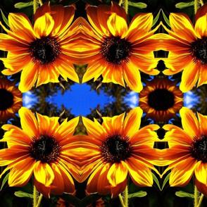 Mandy's Sunflower