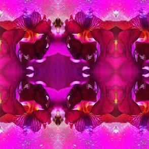 Inner Chamber Iris by Mandy Ramsey