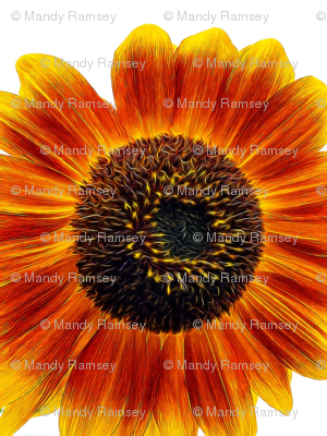 Rtalkeetna-white-sky-w-sunflower-tangled_preview
