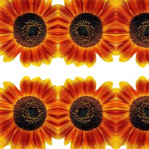 Talkeetna Sunflower