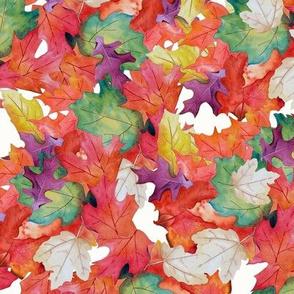 Falling Leaves-White Backg