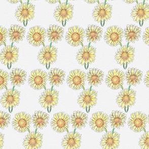 Magic Daisy flowers
