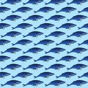 Humpback Whale on blue