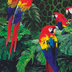 Parrot Collage