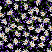 Little Daisies + Violets | Black