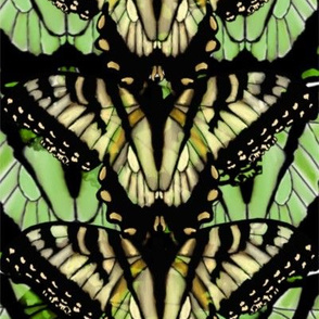 Monarchs on Green