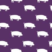 Pigs   Purple   Farm Animals
