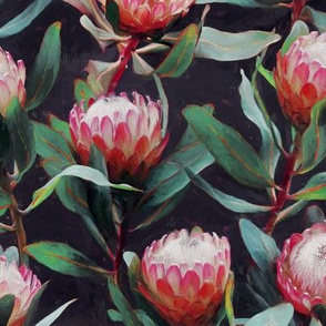 Evening Proteas - Pink on Charcoal - small print