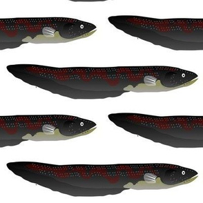 South American Electric Eel