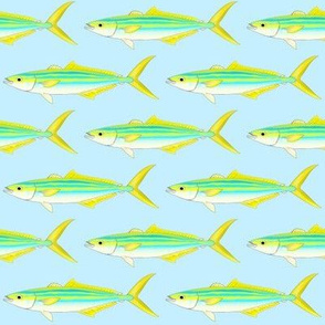 Rainbow Runner on light blue