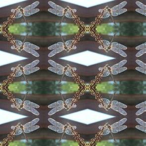 DragonflySunshine
