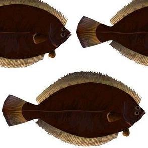 Winter Flounder
