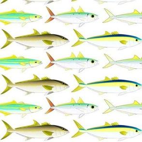 5 Jack fish