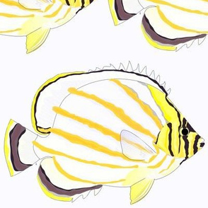 Ornate B utterflyFish