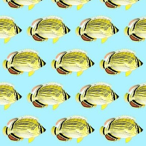 Oval Butterflyfish on light blue