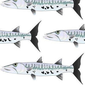 GreatBarracudaSF